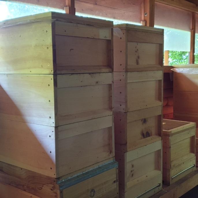Die Bienenstöcke im Bienenhaus.