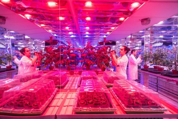 Die Abteilungen Pflanzen-Biotechnologie sowie Molekularbiologie und Virologie ziehen in den Wachstumskammern Pflanzen für ihre Forschungen an.  (c) Kovalenko