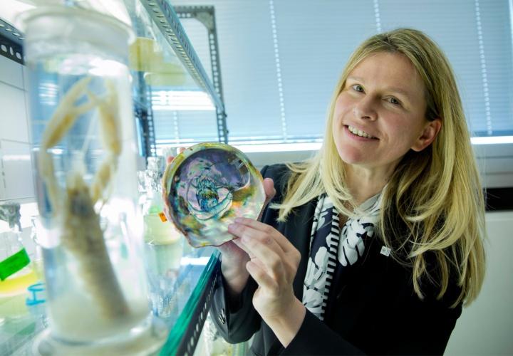 Die Biologin Prof. Ingrid Weiß ist begeistert darüber, dass Organismen wie Schnecken, Muscheln und Krebstiere es schaffen, aus einem weichen Gewebe feste, funktionelle Materialien zu produzieren. (c) Uni Stuttgart/Regenscheit